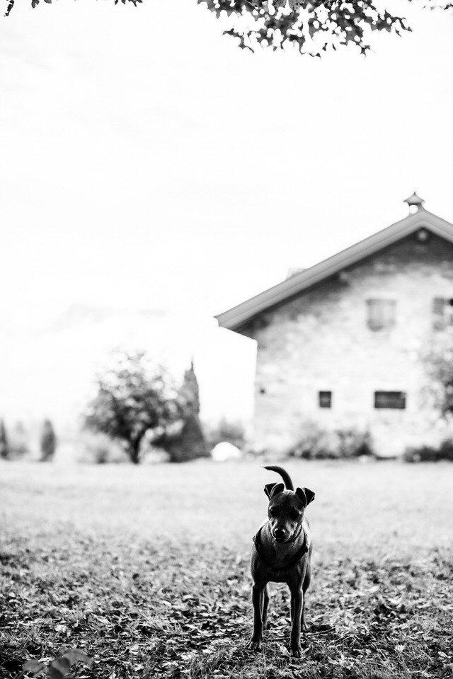 Matrimonio, Matrimonio a Belluno – Laura + Michele, Fotografo Belluno - Matteo Crema - Matrimonio, Architettura, Pubblicità, Fotografo Belluno - Matteo Crema - Matrimonio, Architettura, Pubblicità